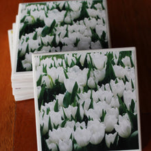 Photography by Rosemary (Tulips White Coasters) - Set of 4