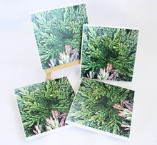Art by Lee Murphy (Foliage Folly) - Set of 4