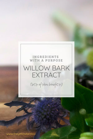 Ingredients With A Purpose: Let's Talk Willow Bark Extract Skin Benefits!