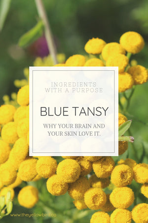 Blue tansy benefits for skin and aromatherapy yellow bird blog