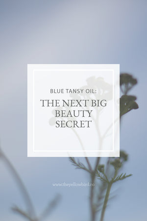 Blue Tansy Oil: the Next Big Beauty Secret