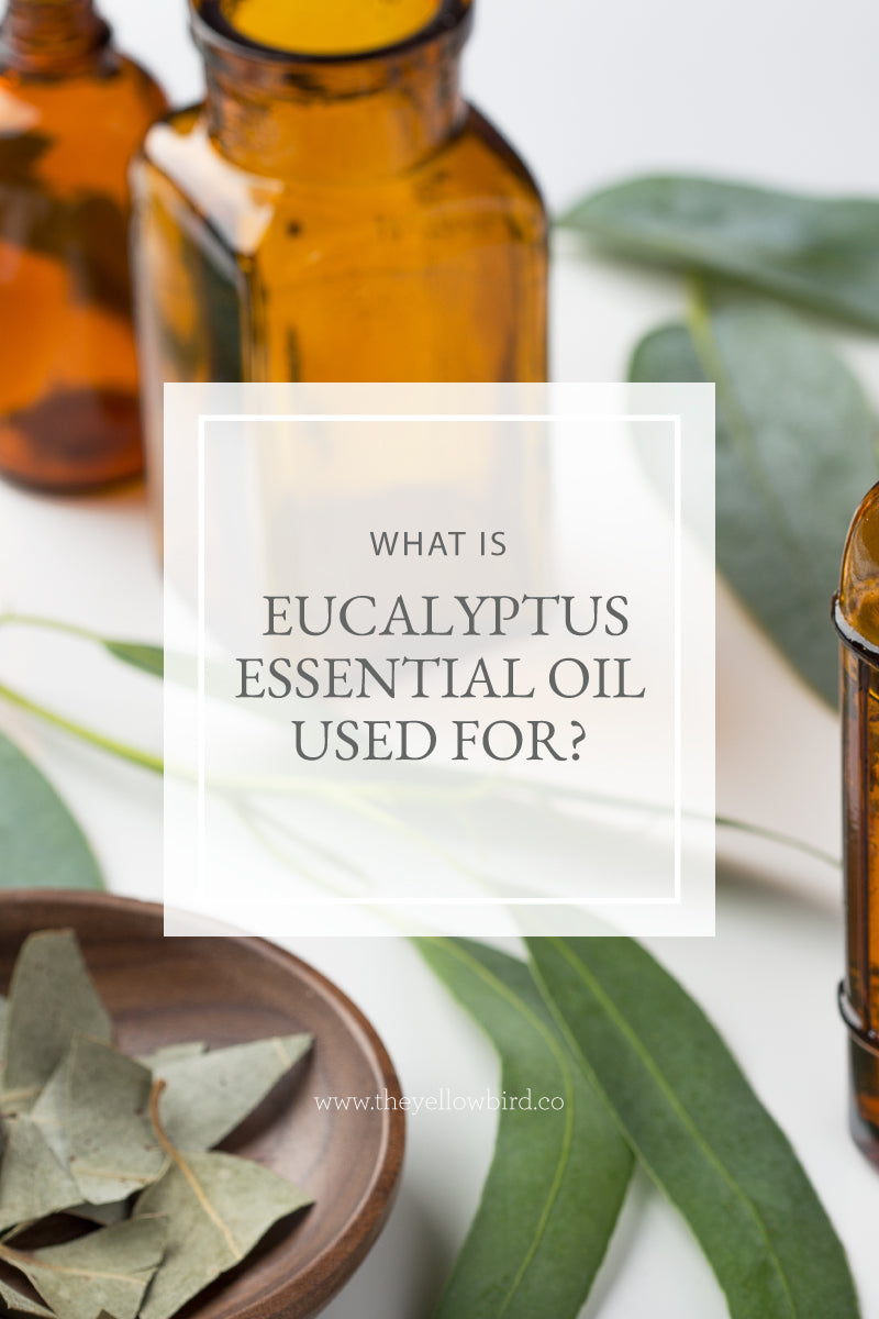 What is Eucalyptus Essential Oil Used For?