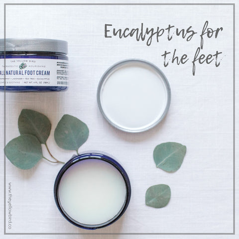 Eucalyptus Oil Benefit for feet yellow bird foot cream