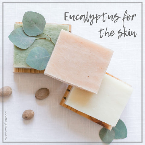 Eucalyptus Oil benefits for skin yellow bird eucalyptus soap