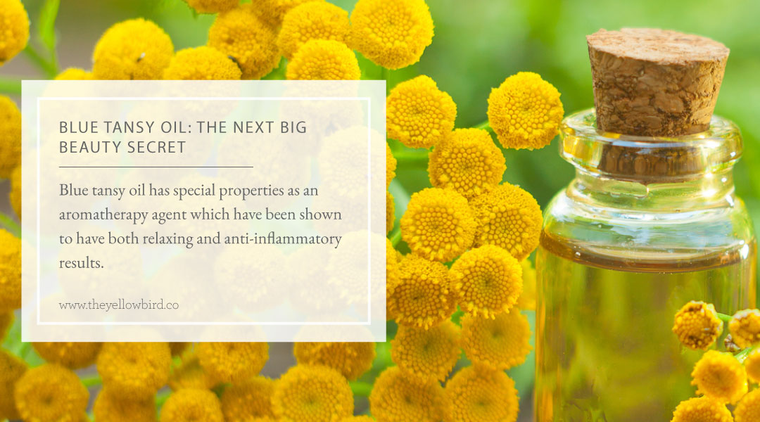 Blue Tansy Oil the Next Big Beauty Secret
