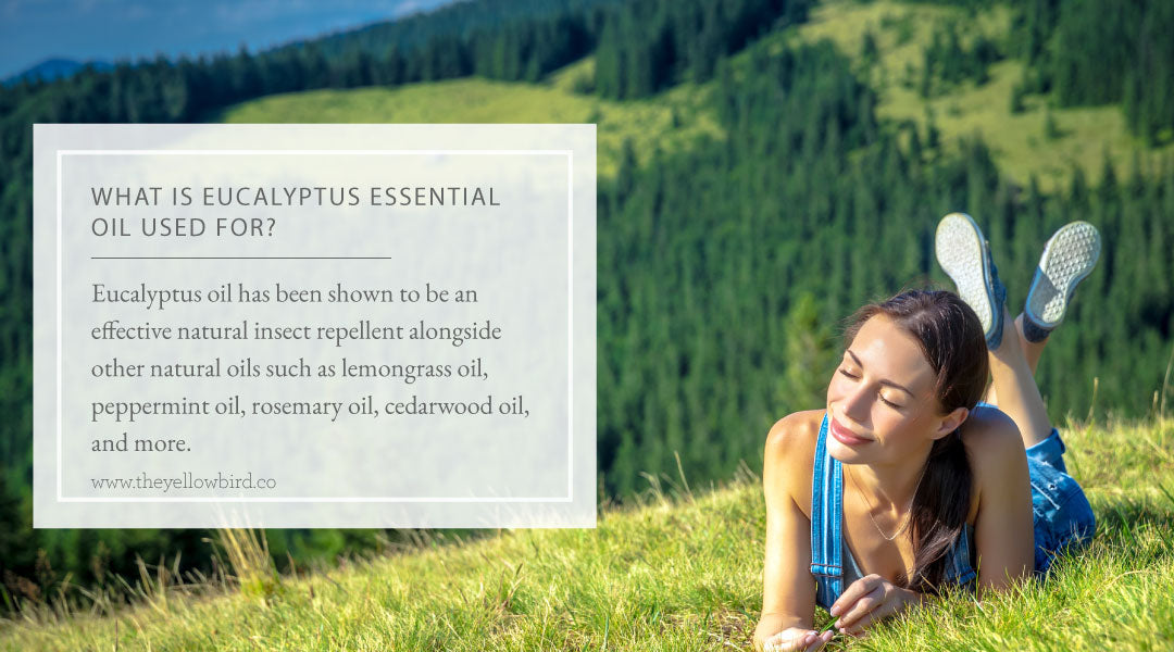 What is Eucalyptus Essential Oil Used For