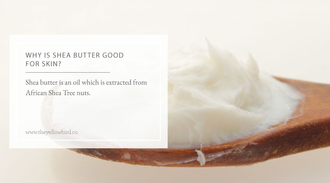 Why is Shea Butter Good for Skin