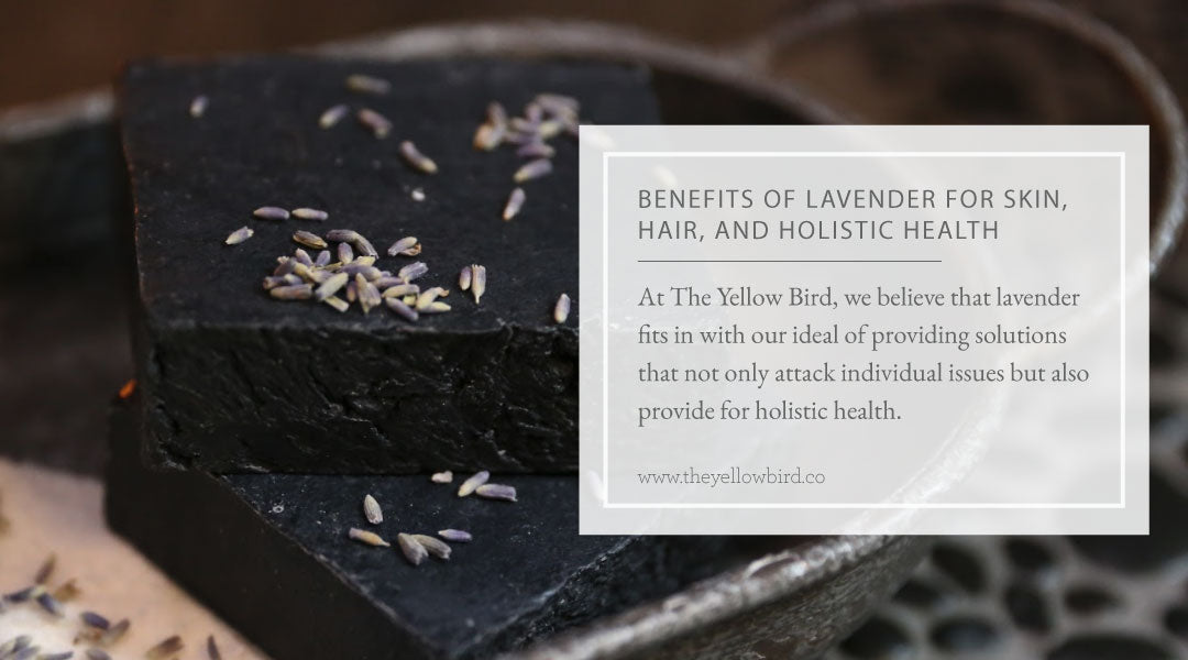 Benefits of Lavender for Skin Hair and Holistic Health