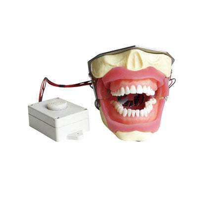 HST-E16 Dental Anesthesia Extraction Model with Buzzer