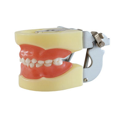 HST-A3 Dental Child Model