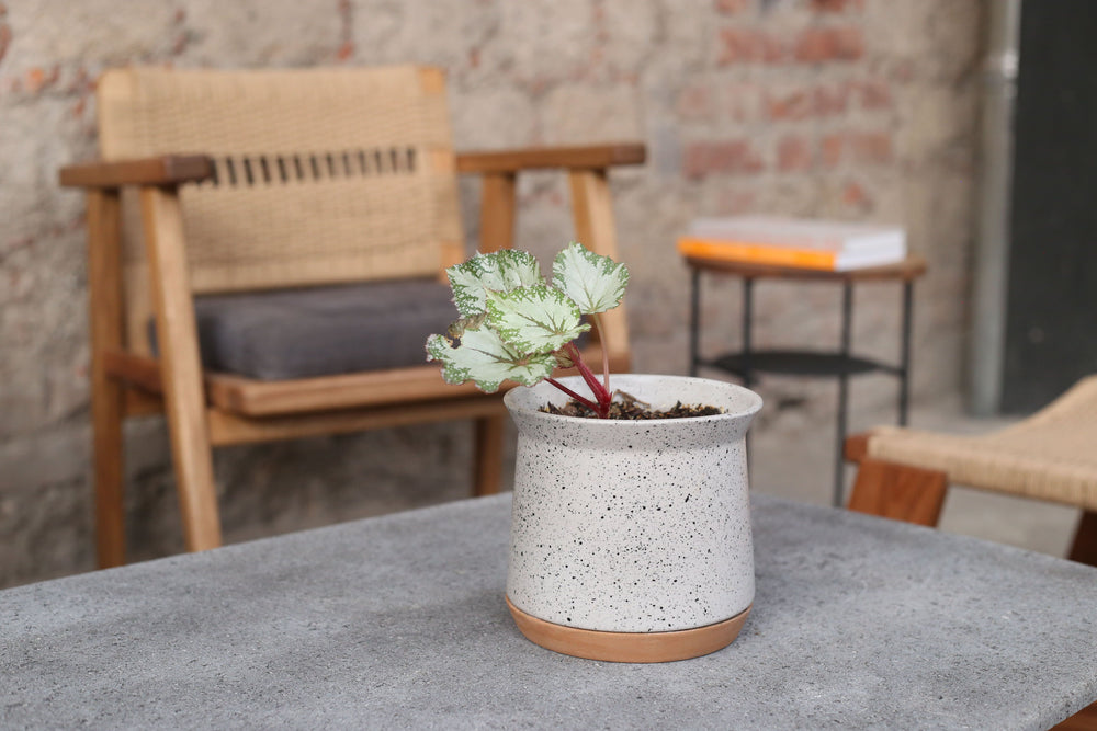 Motted White Plant Pot