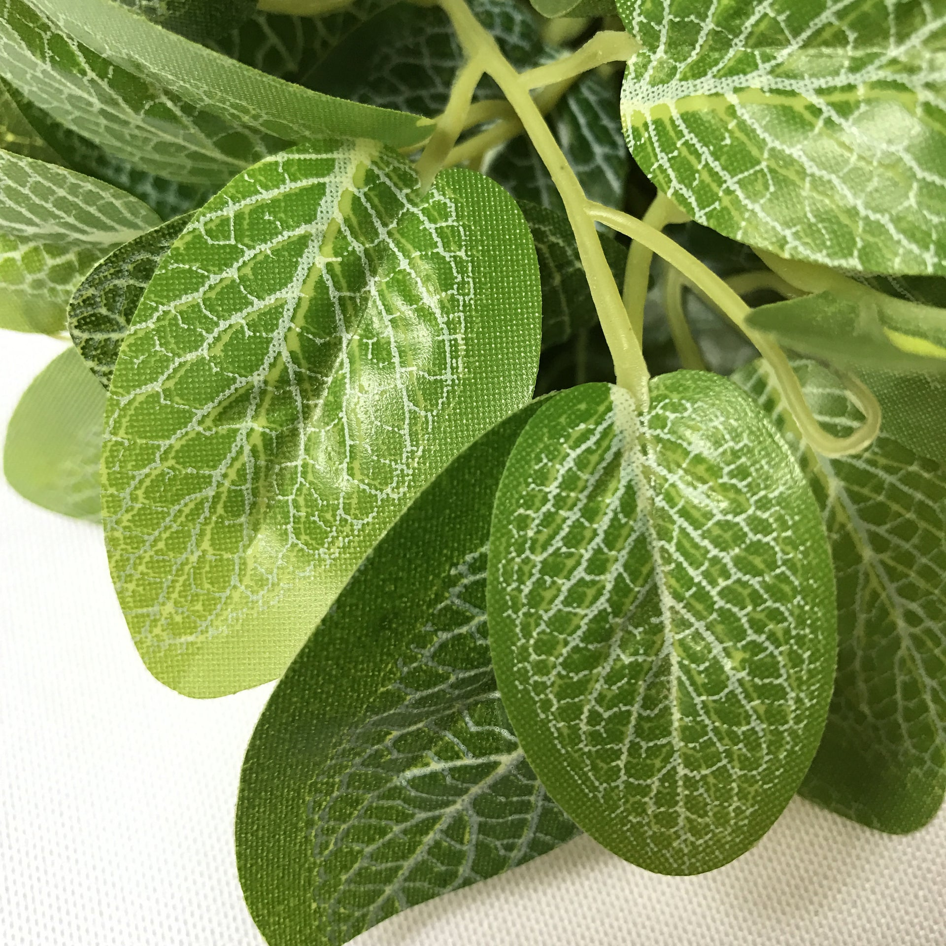 Round Leaves Mint