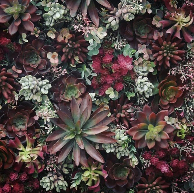 Green Wall - Artificial Desert Sempervivum