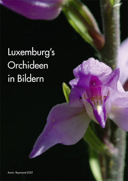 Luxemburg's Orchideen in Bildern