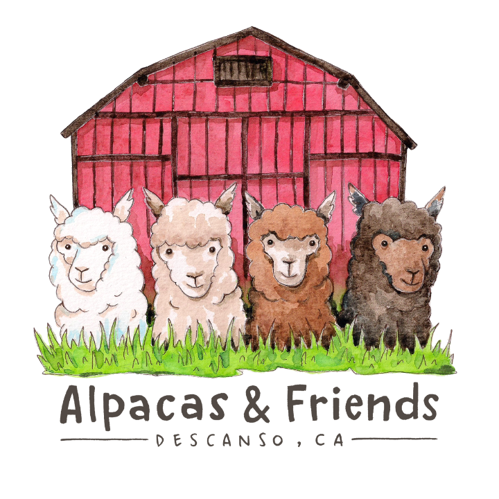 Alpacas and Friends, Descanso