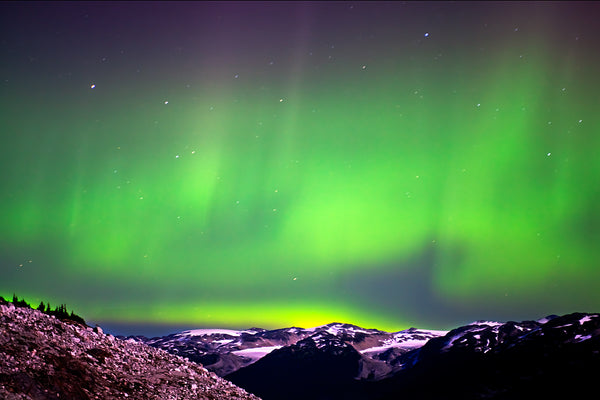 Green and yellow Aurora Borealis over the snowy mountains of Canada Large Canvas Wall Art by Shel Neufeld