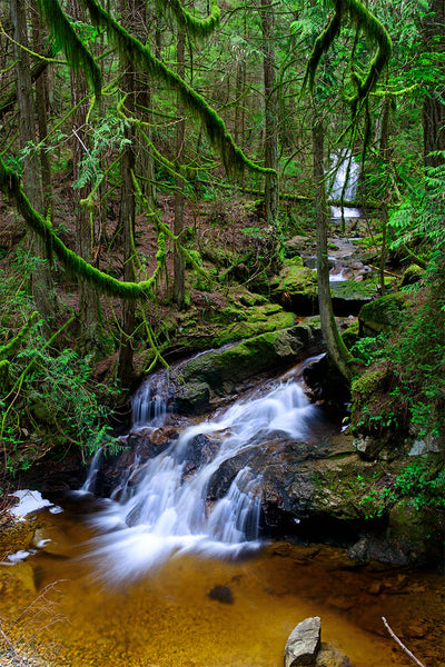 Clack Creek, BC Nature Ancient Forest Photography Print by Shel Neufeld, Prints Available in a variety of sizes