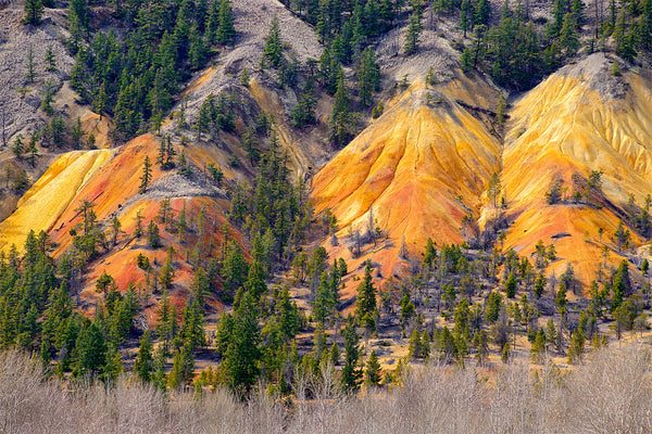 Orange coloured hills close to Clinton, BC, Canada. Fine Art Photography Print by Shel Neufeld
