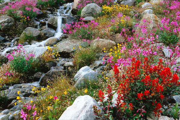Colourful Wildflower Garden photography print canvas wall art by Shel Neufeld