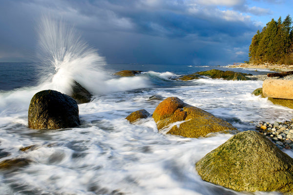 Wild Life Photography Print Coastal Wall Art Canvas by Shel Neufeld WildArt Photography