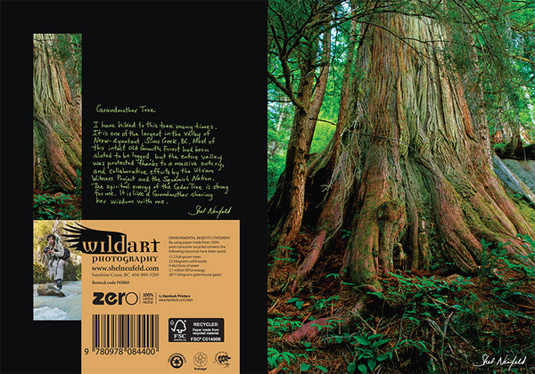 Old Growth Ancient Forest Tree with root photography nature greeting card by Shel Neufeld