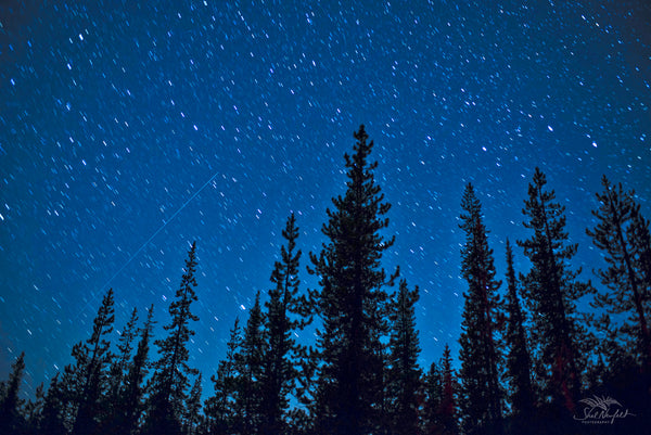 A blue night sky is filled with stars and a star streak. In the foreground of the photo is trees reaching for the sky. This astrophotography image is by Shel Neufeld, nature and wildlife photographer from Roberts Creek, BC, Canada.