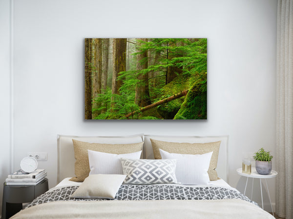 Ancient Forest Fine Art Photography Print by Shel Neufeld, Canadian nature and landscape photographer