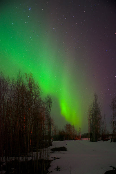 Green and purple Northern Lights from Northern BC, Canada captured by Canadian photographer Shel Neufeld of WildArt Photography