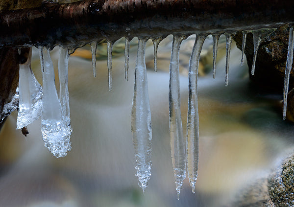 Hanging Icicles Macro Photography by Canadian Photographer Shel Neufeld
