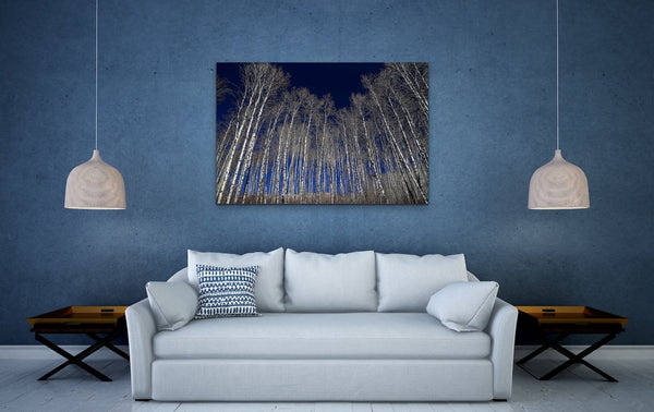 White Aspen Tree Forest Fine Art Photography Canvas Living room Wall Print by Shel Neufeld WildArt Photography