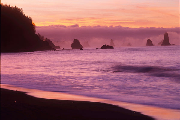 Olympic Peninsula, Washington State - Pink sunset by Shel Neufeld