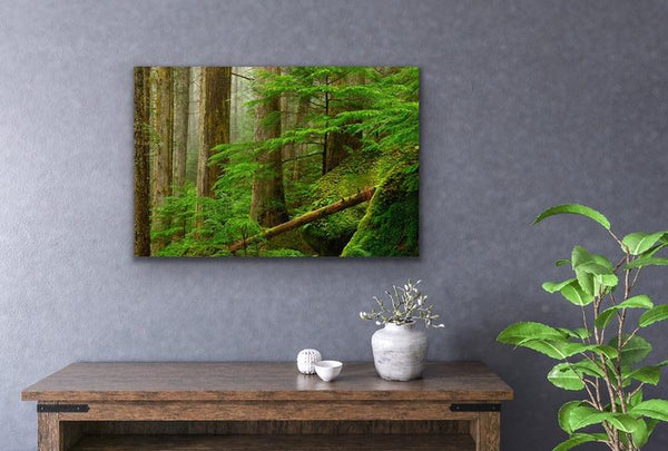 Princess Louisa Inlet Forest Green Home Decor Nature Photography Fine Art Print by Shel Neufeld, Canadian photographer