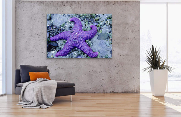 Purple Starfish Photography Print on living room wall. Artwork by Shel Neufeld, Canadian Nature Photographer