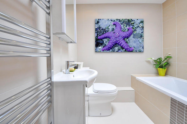 Purple Starfish Photography Print on bathroom wall. Artwork by Shel Neufeld, Canadian Nature Photographer