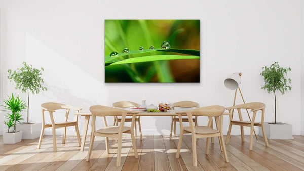 Water drops on green leaf, Fine Art Photography Print living room wall decor by Shel Neufeld, Canadian Landscape Photographer