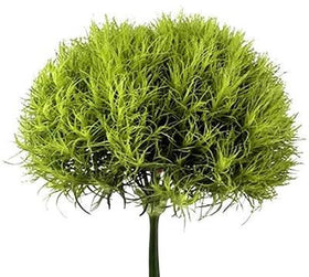 Dianthus Green Ball - BloomsyShop.com