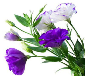 Lisianthus Purple - BloomsyShop.com