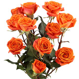 Spray Roses Orange