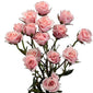 Spray Roses Light Pink