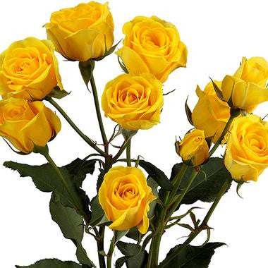 Spray Roses Yellow