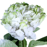 Hydrangea Airbrushed Green
