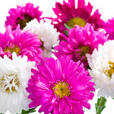 Aster Assorted - BloomsyShop.com
