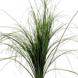 Green Bear Grass - BloomsyShop.com