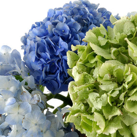 Hydrangeas Assorted - BloomsyShop.com