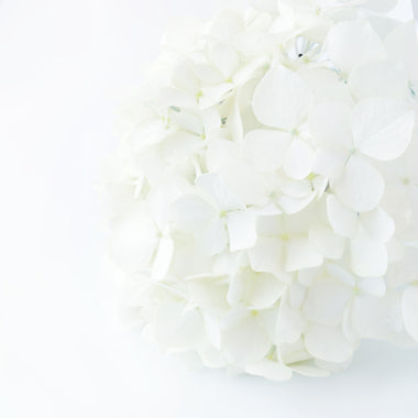 Hydrangeas White - BloomsyShop.com