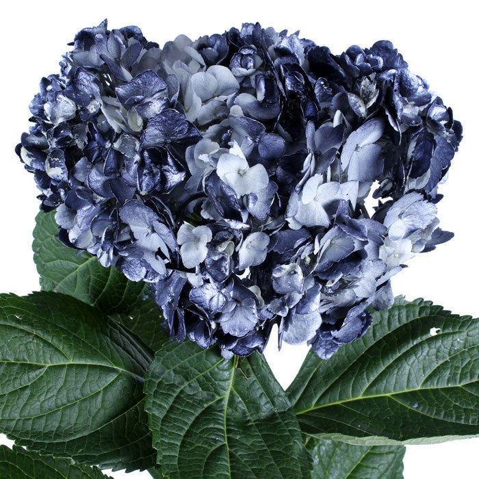 Hydrangea Airbrushed Metallic Black