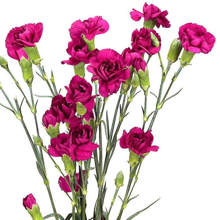 Mini Carnations Purple - BloomsyShop.com