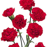 Mini Carnations Red - BloomsyShop.com