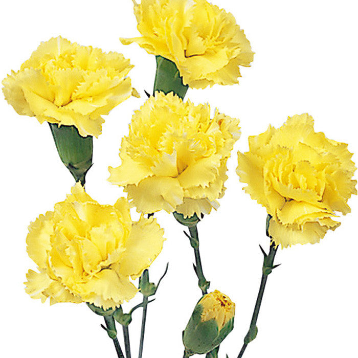 Mini Carnations Yellow - BloomsyShop.com