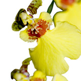 Oncidium Orchids Yellow - BloomsyShop.com